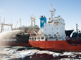 JAPAN: No decision made on whale hunt | The Australian government should oppose Japanese whaling in Antarctica. | Scoop.it