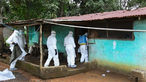 Viisi kysymystä Ebolasta - Miksi WHO julisti hätätilan? | Terveystieto | Scoop.it