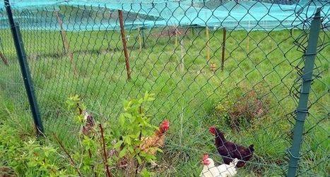 Les particuliers concernés  par la grippe aviaire | Home | Scoop.it