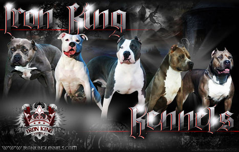 Pitbull Breeders   Pitbull Puppies   Iron King Kennels   Pitbull Puppies   Scoop.it
