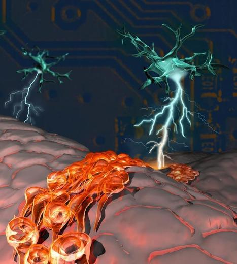 Neuron tells stem cells to grow new neurons   The future of medicine and health   Scoop.it