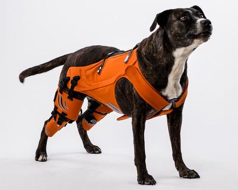 galia weiss's hipster harness rehabilitates dogs with hip dysplasia - designboom | architecture & design magazine | handicap design | Scoop.it