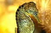Comment s'occuper d'hippocampes - Blog de zoomalia.com | PETS & ANIMAUX | Scoop.it