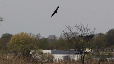 The Remarkable Comeback of the Pa. Bald Eagle | This Gives Me Hope | Scoop.it