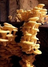 A Mushroom Cave in France That'll Make You Feel Like You're Shrooming - Condé Nast Traveler   Conde Nast   Scoop.it