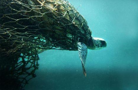 The Unseen Slaughter Under the Sea   GarryRogers NatCon News   Scoop.it