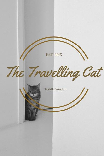 Cats on Planes | Love Of Cats | Scoop.it
