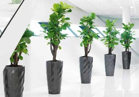 Pick Best Indoor Plants from Plant Hire Melbourne Companies | Foliage Indoor Plant Hire | Scoop.it