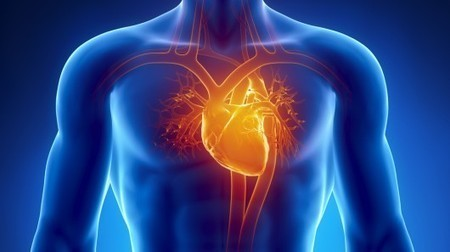 "Induced ""pacemaker"" heart cells could take the place of man-made pacemakers 