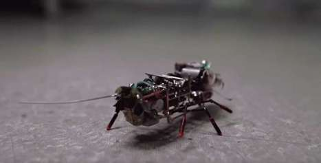 Russia Shows Off Robotic Cockroach | Popular Science | DigitAG& journal | Scoop.it
