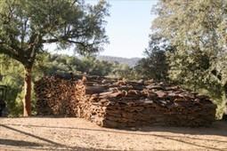 Extremadura espera una producción de 23.000 toneladas de corcho | DEHESAS IBERICAS | Scoop.it
