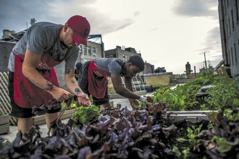 Faith, Hope, Charity and Vegetables Grow at Bowery Mission | Gardening in the City | Scoop.it