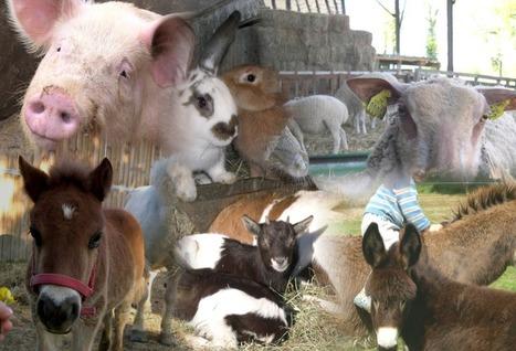 Pyrénées-Atlantiques : tous à la ferme ! | Agriculture en Pyrénées-Atlantiques | Scoop.it