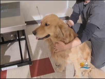 Your Dog May Be Smarter Than You Think - CBS Miami Video | Empathy and Animals | Scoop.it