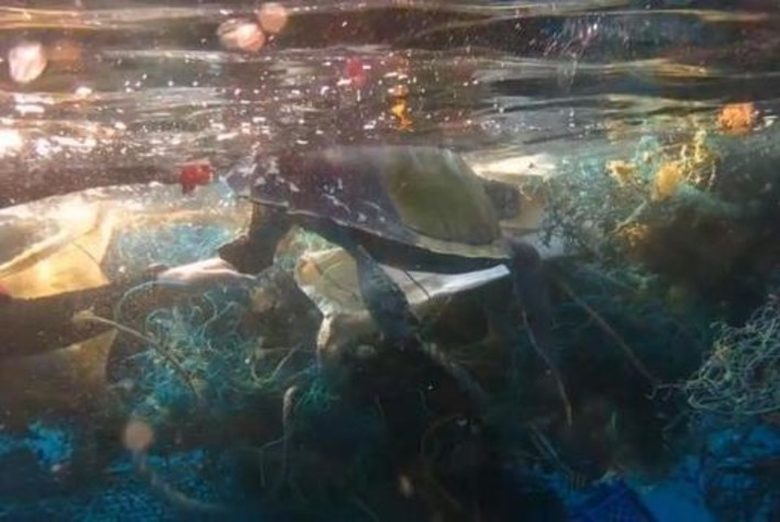 Scuba diver cuts through 'ghost' net to free trapped turtle | Scuba Diving News | Scoop.it