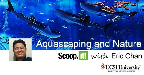 A Message From The Curator | Aquascaping and Nature | Scoop.it