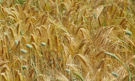 La farina crea dipendenza? | senza glutine | Scoop.it