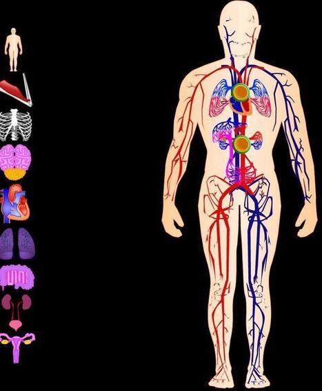 El cuerpo humano en flash - Didactalia: material educativo | EFenlaweb: Cuerpo | Scoop.it
