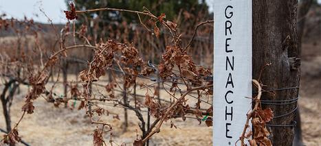 Arizona Wineries AZ | Business | Scoop.it