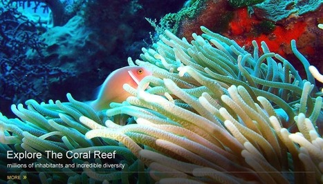 Blane Perun's TheReefs.Org - Discover Cup Coral. Inspiring Oceanic Passion Since 1999 | cup coral at thereefs.org | Scoop.it