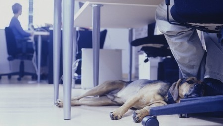 Why You Should Take Your Dog to Work | TheFutureofWork | Scoop.it