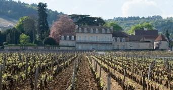 Morey : LVMH s'offre un joyau de la Bourgogne @minichine89 via @lebienpublic | sans sucre ajouté !!!! ;) | Scoop.it