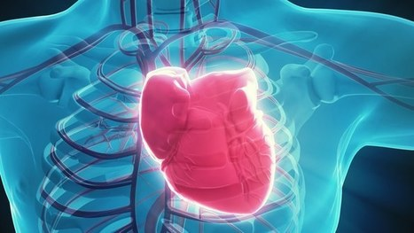 Electrically-trained muscle cells get damaged hearts pumping | Longevity science | Scoop.it