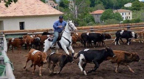 Les cavaliers insulaires se distinguent encore en western | Cheval et sport | Scoop.it