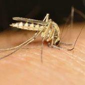 L'hécatombe des maladies à transmission vectorielle | Toxique, soyons vigilant ! | Scoop.it