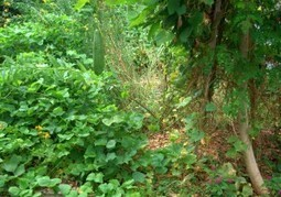 Grow Your Own Edible Forest Garden : Grow Permaculture | Permaculture: Organic Gardening, Homesteading, Bio-Remediation | Scoop.it