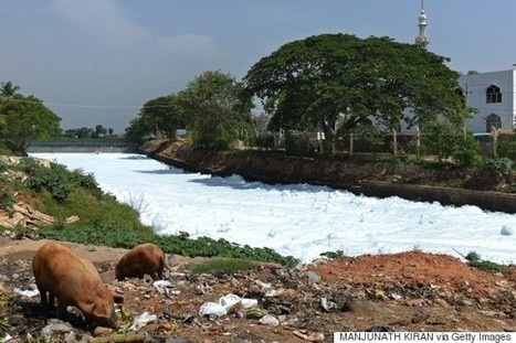 "This Lake In India Is So Polluted It Caught Fire (""this is how a river was overrun w/ chemicals"") 