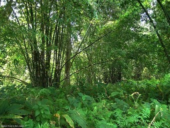 Indian Man Single-Handedly Plants a 1,360 Acre Forest | Broad Canvas | Scoop.it