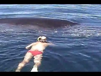 Humpback Whale Shows AMAZING Appreciation After Being Freed From Nets - YouTube   Oceanic   Scoop.it