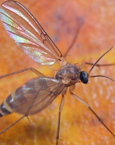 Plus de 200 nouvelles espèces vivantes découvertes dans l'Himalaya | EntomoNews | Scoop.it