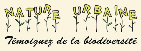 Une année de biodiversité urbaine et une exposition qui fait participer le citoyen | Les colocs du jardin | Scoop.it