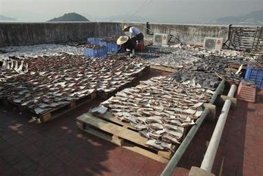 EU agrees to tighten its ban on 'shark finning' | Sustain Our Earth | Scoop.it