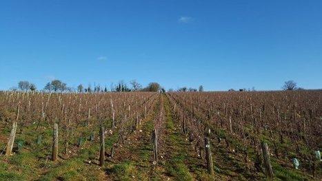 Libéralisation des droits de plantation de la vigne : les avis sont partagés - France 3 Centre-Val de Loire   Le Fil @gricole   Scoop.it