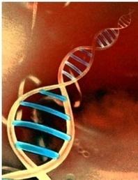 Manipulação Genética | Engenharia Genética | Scoop.it