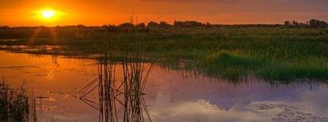 Learning about the Everglades | National Park Foundation | Scoop.it