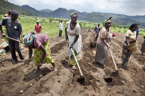 Le bonheur est dans les champs pour 190.000 agriculteurs rwandais   BTC   éducation au développement   Scoop.it