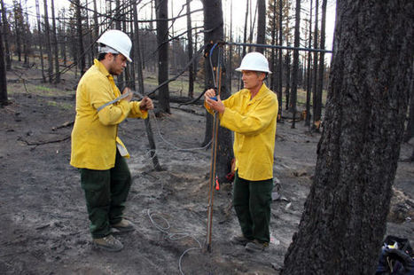Scorched area may yield new research opportunity | Arizona Daily Star | CALS in the News | Scoop.it