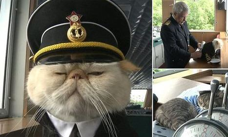 A purrfect river cruise! Meet the cat captain of Russian ship | River Cruise News | Scoop.it