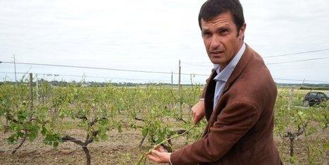 Vignoble du cognac : la grêle ruine les espoirs de production record | Actualités du Cognac | Scoop.it
