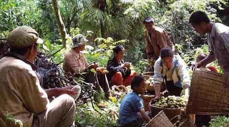 UN News - Upcoming UN forum highlights vital contribution of forests to food security and nutrition | Food Security and Nutrition | Scoop.it