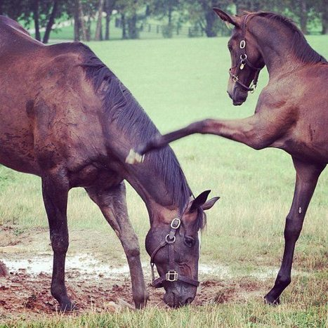 Zenyatta and her colt... before weaning | Cool Happenings | Scoop.it