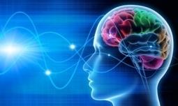 CERVEAU: Nos valeurs profondes sont ancrées dans son mode par défaut   La Boîte à Neurones d'A3CV   Scoop.it