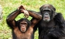 Jane Goodall hails 'awakening' as US labels all chimpanzees endangered   GarryRogers Biosphere News   Scoop.it