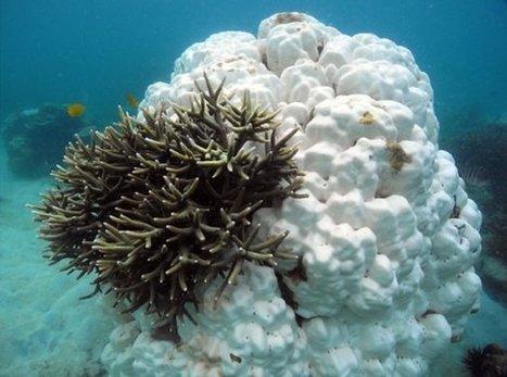 Se agota el tiempo para los corales | Canal Azul 24 | Agua | Scoop.it