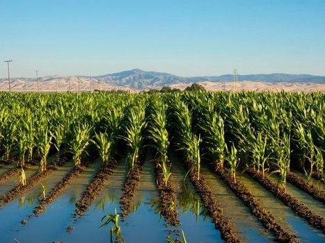 Earth's Soil Is Getting Too Salty for Crops to Grow | FCHS AP HUMAN GEOGRAPHY | Scoop.it