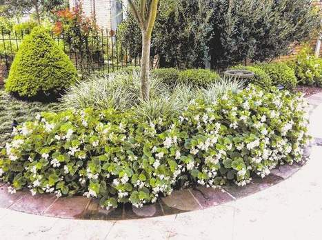 Colorful bedding plants bring shady yards to life - Monroe News Star | Container-a-Gogo | Scoop.it